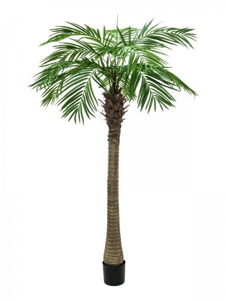 EUROPALMS Phönixpalme luxor, Kunstpflanze, 240cm